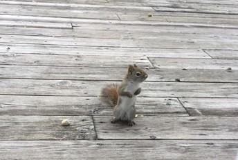 A new backyard friend....