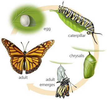 Make a Butterfly Life Cycle Science Book