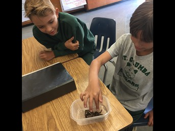 4th Graders Touching and Learning about Tarantula Exoskeleton