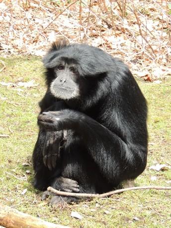 Erie Zoo Pen Pals