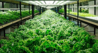 Seven Facts That Nobody Told You About Hydroponic Systems For Sale