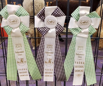 Layla Cotter, showing off beauty, earns 3 ribbons