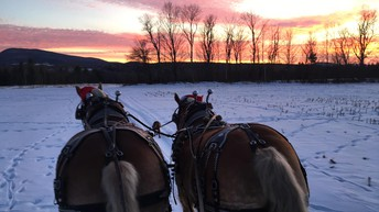 The Kingdom's Horse Drawn Wagon & Sleigh Rides