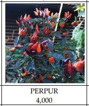 Perpur Peppers