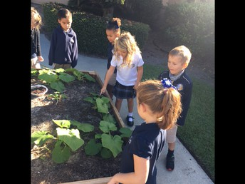 Checking on our pumpkin plants