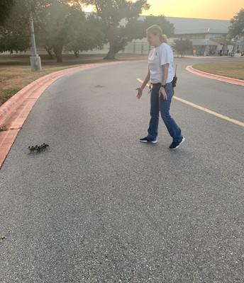 Caution duck crossing!