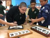 Students observe pollinator specimens.