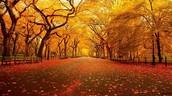 Fall is Here! Winter is Coming! /  ¡Otoño está aquí! ¡Viene el invierno!