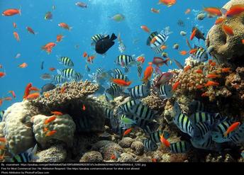 June 1st - World Reef Awareness Day