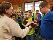 Students Examine Stuffed Creatures