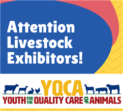 Youth for the Quality Care of Animals - YQCA