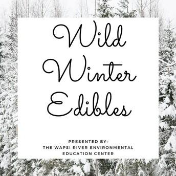 Wild Winter Edibles