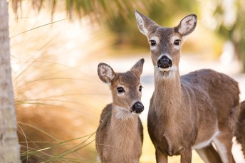 RI Wildlife Deer Program