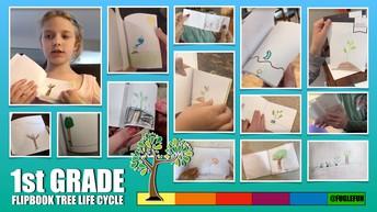 Tree Life Cycle Flip Book