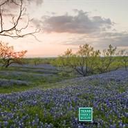 Chainsaws & Wildflowers: Save the Prairie