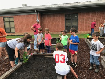 Sweet Potatoes are Planted!