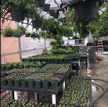 SHS Plant Sale