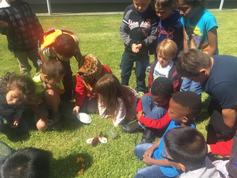 KG Exploring the Life Cycle of Butterflies