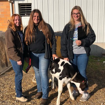 D1 Dairy Cattle Judging CDE