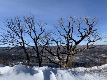 More Winter Trees by Mr Stucki