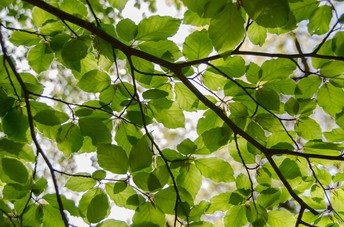 Have your students explore the importance of trees in their own surroundings.