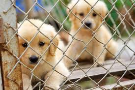 puppies waiting to get adopted