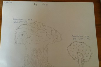 Jett's Pohutukawa sketches