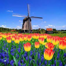 Tulip Time Attendance