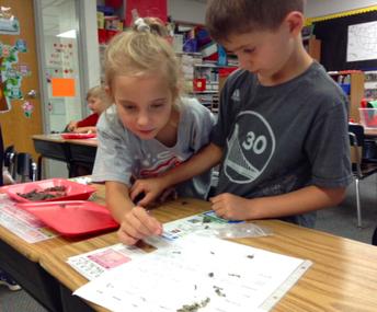 Collaborative Scientists