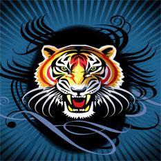 #tigerup #weRtest