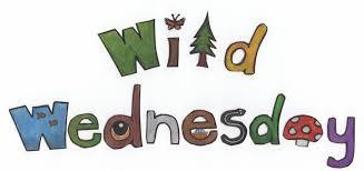 Wednesday 27