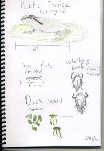 Activity:  Start a NATURE JOURNAL