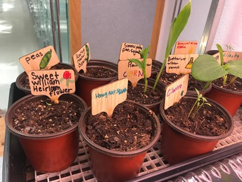 Teaching students to grow