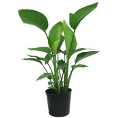 Nine Tools Everyone in the House Plants Industry Should Be Using