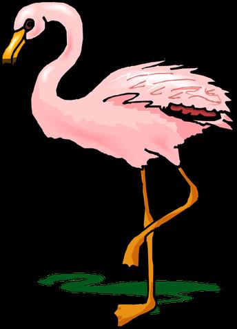 Flamingo Flocking is Back!