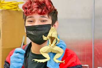 ...frog dissection?