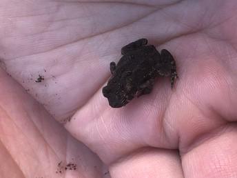It's a frog!