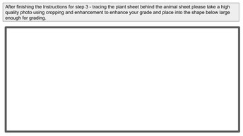 Step 3  - Animals Plants and Color