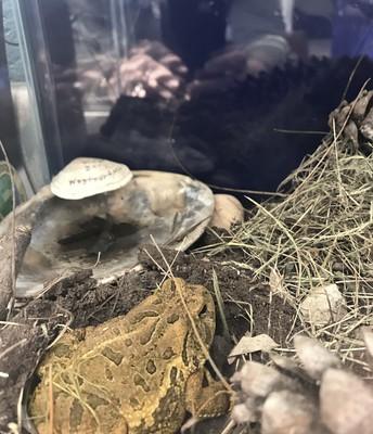 Roxy in her new habitat.