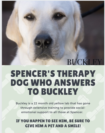 Buckley our Therapy Dog