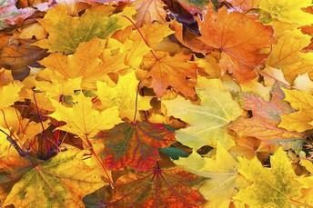 October/November Calendar