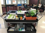 Hydroponics From Sustainable Jersey!