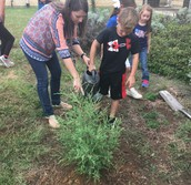 Tree Planting @ SH Primary
