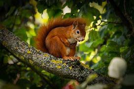 Squirrels Galore