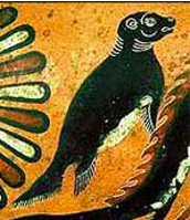 This Week's Fact About Greece:  The monk seal has been a part of Greek's natural and cultural heritage and is described in The Odyssey. The head of a monk seal was even found on a coin dated 500 B.C. Now, however, only 250 monk seals are left.