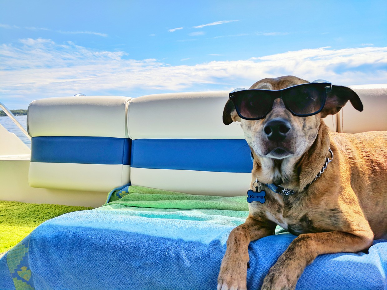 A dog is wearing sunglasses and sitting on a boat.