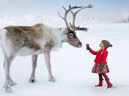 Nature Fact About Reindeers