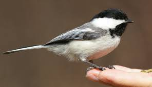 Art -  Spring Bird