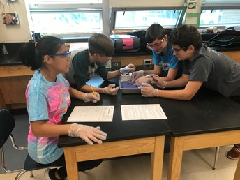 7th Grade Squid Dissections