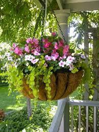 Friends Plant Sale: Pre-Orders Begin